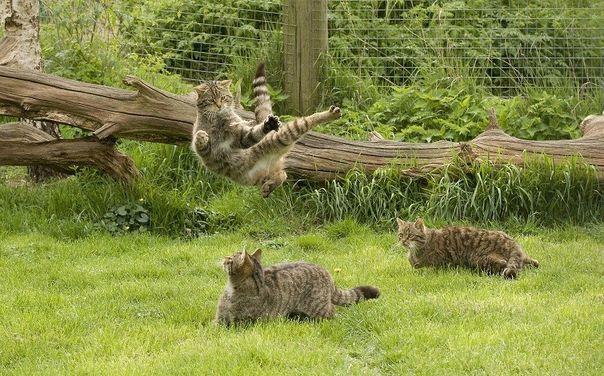 Ninja cats | Animals Come