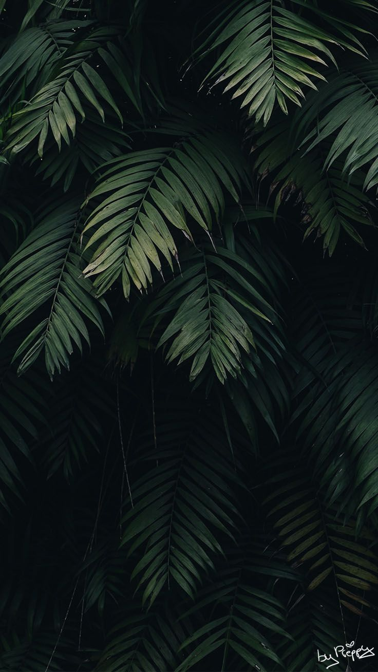 10 Tropical Jungle Iphone X Wallpapers Dengan Gambar Hijau