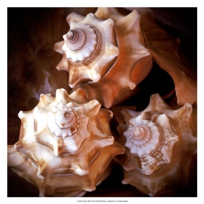 Macro Shells VII by Rachel Perry