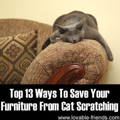 275 Best Cat Training Tips Images On Pinterest