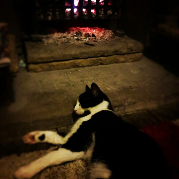 snuggles by the fire are the best way to spend a cold winter's night.