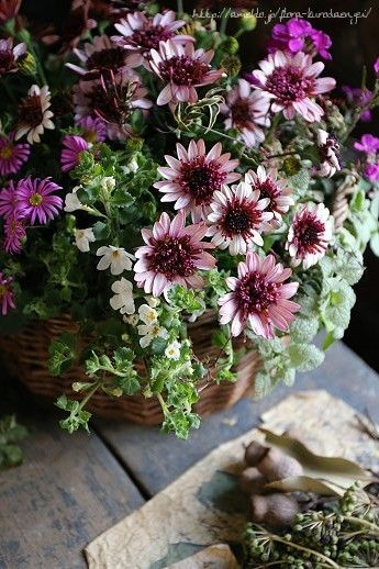 寄せ植え|フローラのガーデニング・園芸作業日記-2ページ目