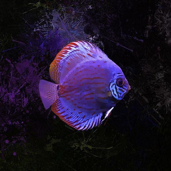 Pin By Olga Kutsenko On Sea Life Weird Sea Creatures Pet Fish Discus