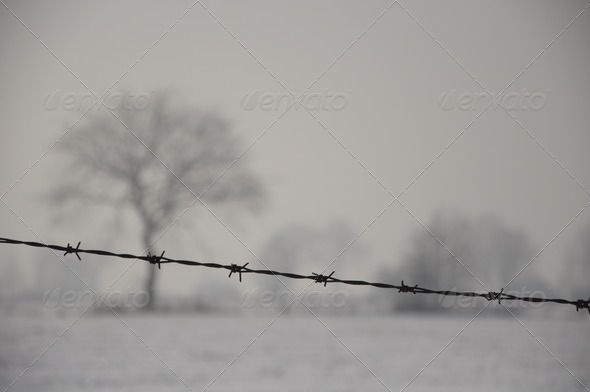 Barbed Wire on a Meadow