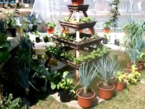 Membuat Kebun Sayur Di Lahan Sempit | Desain Rumah Minimalis 2015