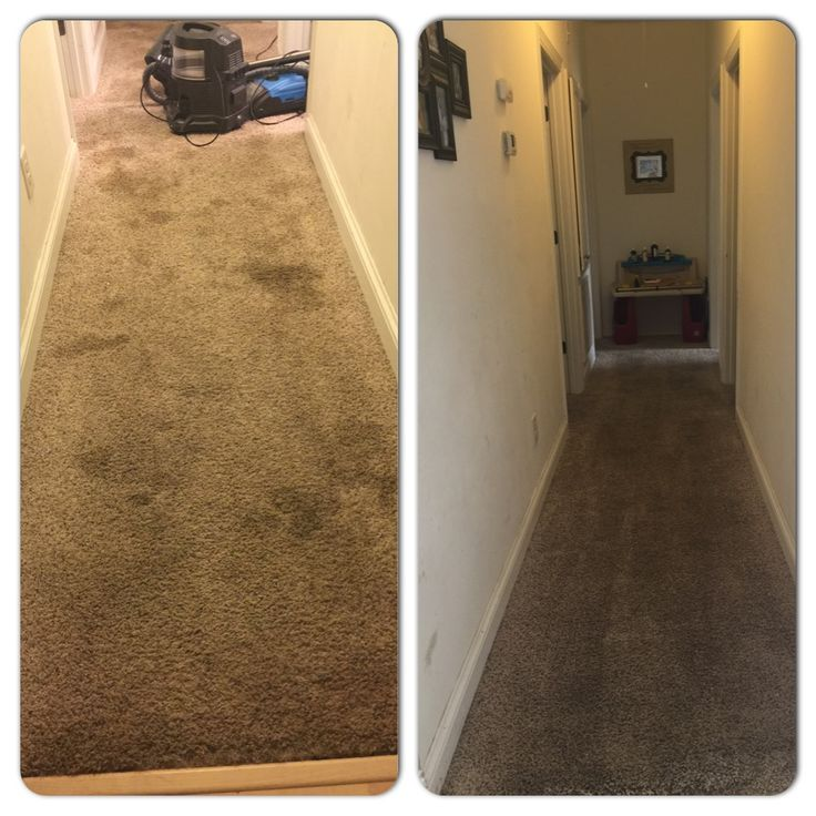 This recipe works and the stains stay away!  Make sure you vacuum your carpet first. Use1/4 cup of borax, 1/4 cup of vinegar, 1/4 cup of salt. Mix to a paste, put on stain. Let stand for about 15-20 minutes or if a deep settled stain let it stay on there for an hr or longer. Rent steam cleaner, or I used my rainbow steam cleaner. Put hot hot hot water and 1 cup of vinegar in water mix together and placed in steam cleaner. Sprayed water on stains and then let steam cleaner suck up the stain!