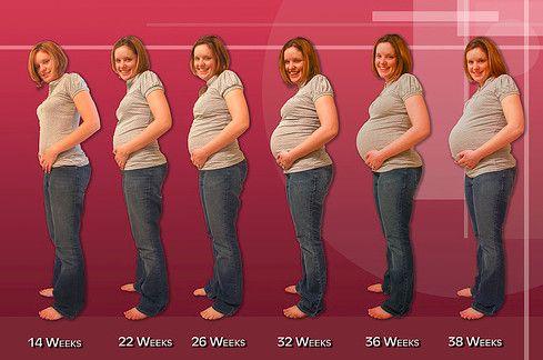 Pregnancy Week by Week Information - http://madailylife.com/pregnancy-week-week-information/