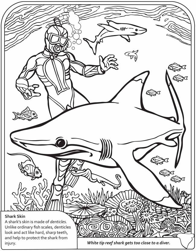 shark printable coloring pages printables pinterest