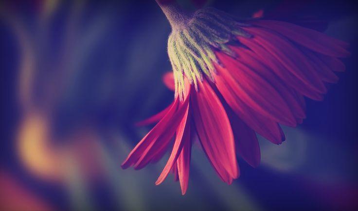 flower balerine