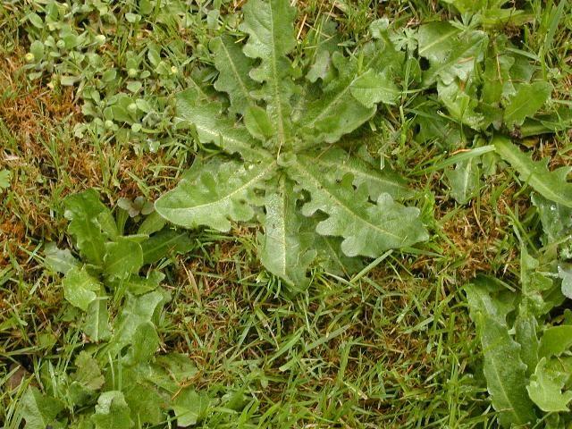 Une nouvelle astuce pour contrer les mauvaises herbes gratuitement !