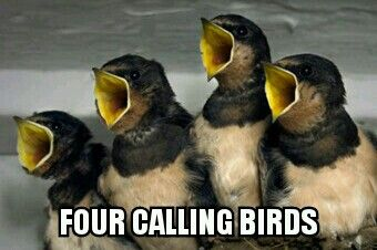 16 best 12 days of christmas 4 calling birds images