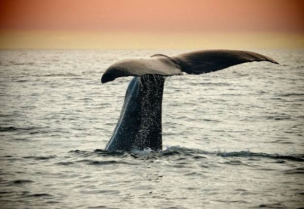 Whale watching in Warrnambool