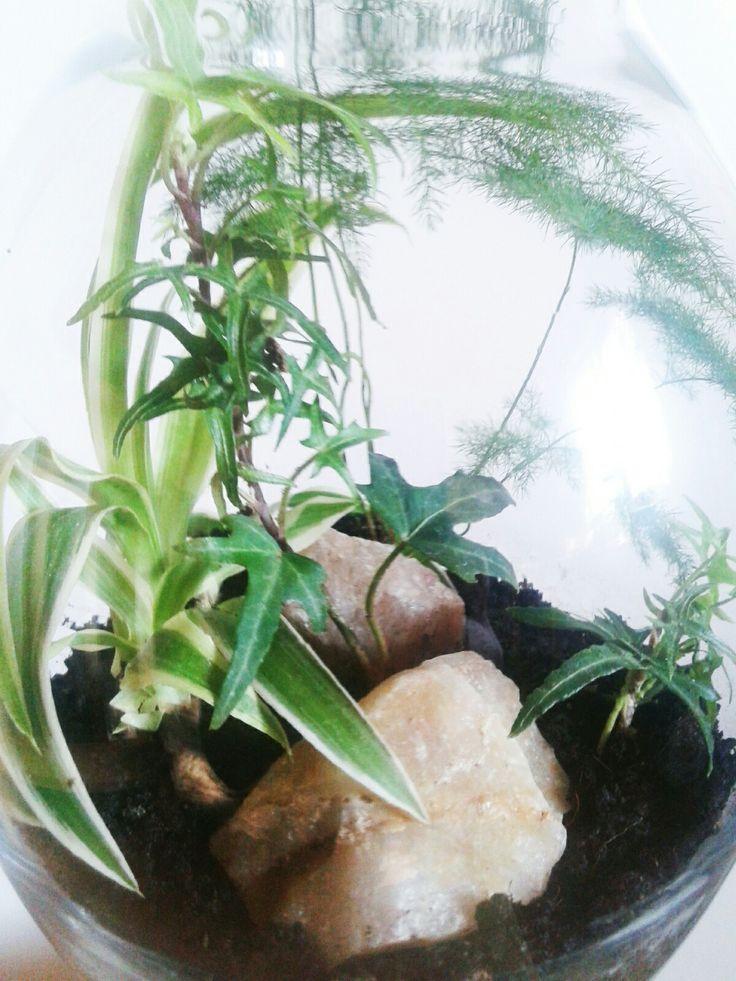 Zielona dżungla w szkle