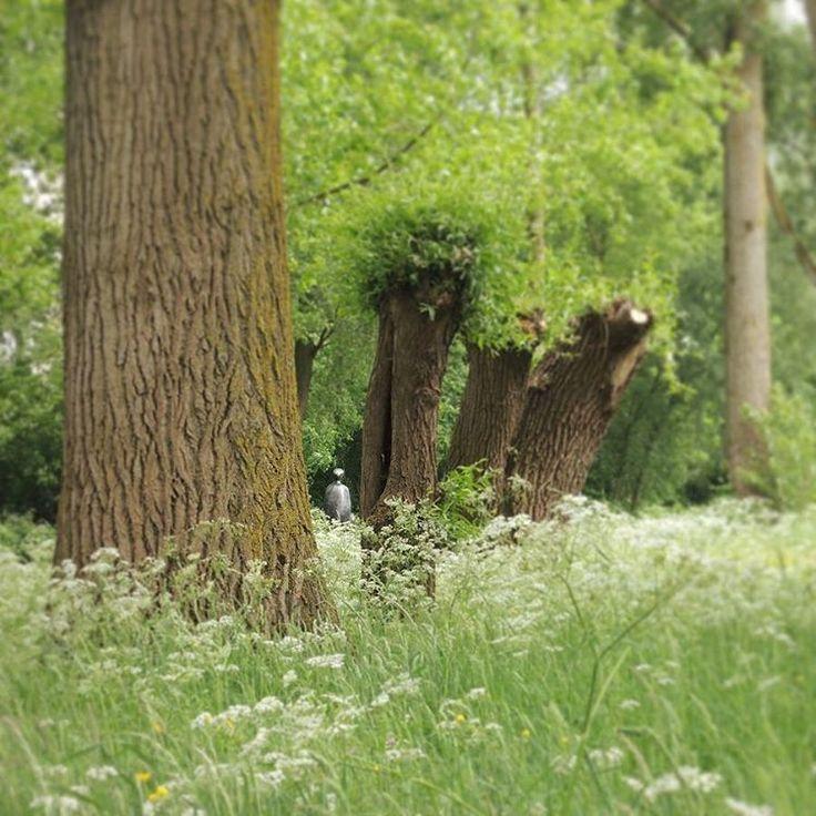 Wegdromen in het groen van het mooie #Vechtzoompark, een bronzen vrouw van kunstenaar Willy Blees #Overvecht