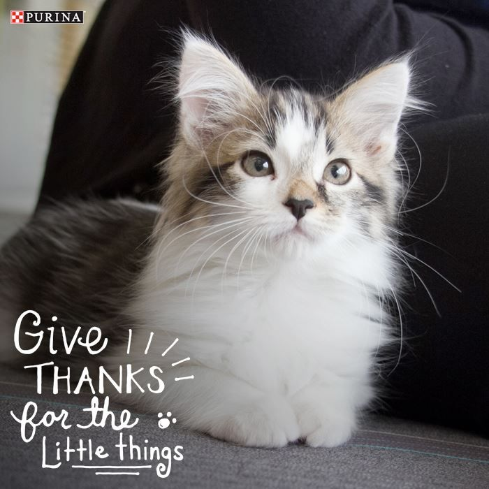 What are we thankful for? Our cats and dogs of course!