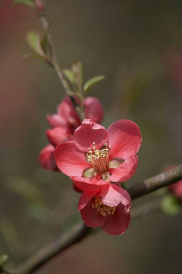 Los mejores arbustos de flor para tu jard n dise o y for Diseno y decoracion de jardines
