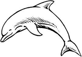 Résultats de recherche d'images pour «coloriage imprimer dauphin»