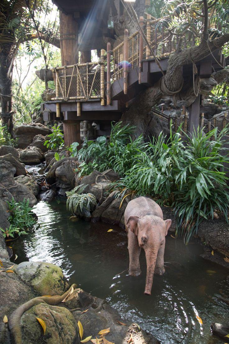Tarzan's Tree House Hong Kong Disneyland - 4 All Things Disney