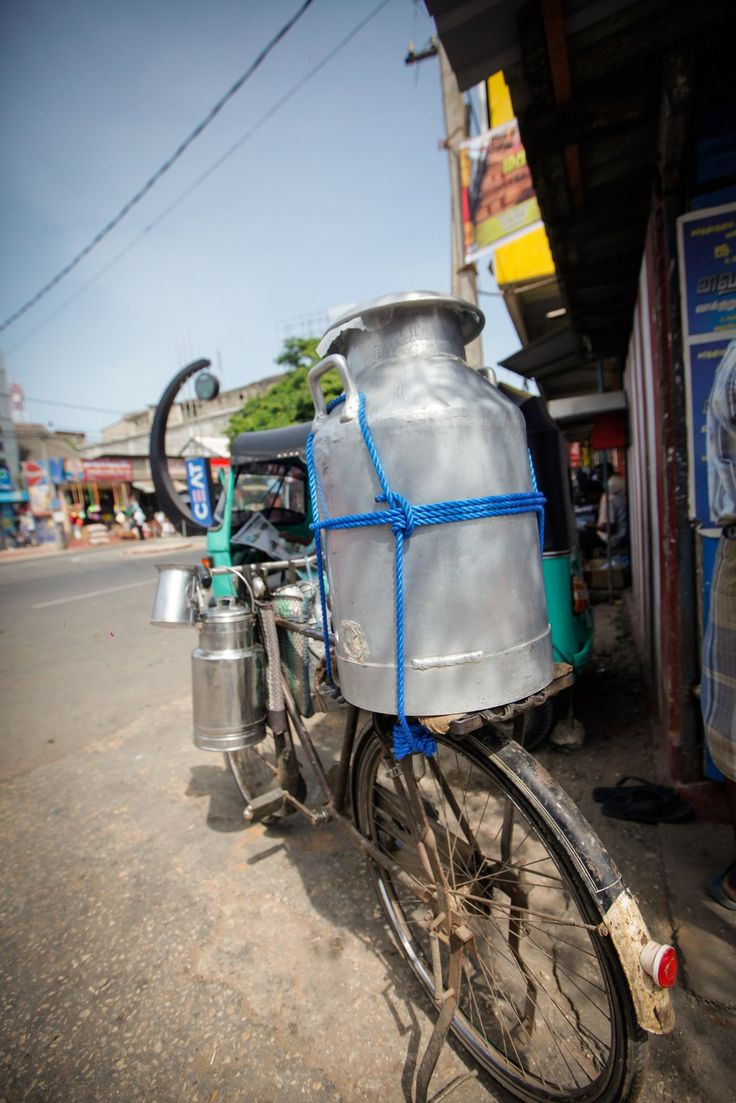 Collecting and delivering the milk by bike