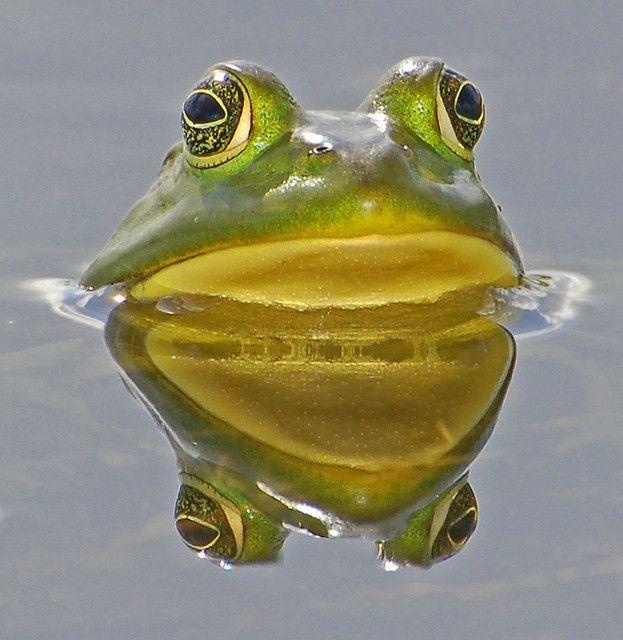 """Frog in a little pond can be much happier than fish in a vast ocean!""  ~~Mehmet Murat ildan ~~X ღɱɧღ"