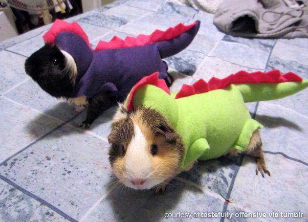 Guinea pigs as dinosaurs HOLY SHIT @Megan Whalon