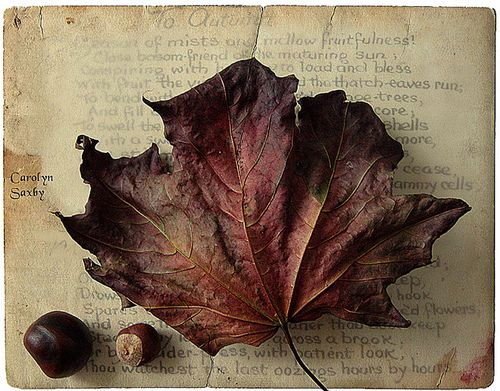 fallPhotos, Red, Nature, Autumn Leaves, Bodacious Brown, Fall, Carolyn Saxby, Fairies Tales, Autumn Leaf