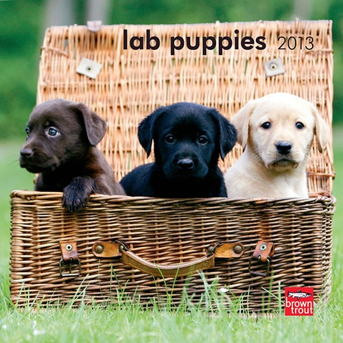 Lab Puppies Mini Wall Calendar: There are no words to express how adorable these puppies are. With their warm, pink bellies, soft fur, and beautiful faces, they can bring out the sun on the foggiest day.  http://www.calendars.com/Labrador-Retrievers/Lab-Puppies-2013-Mini-Wall-Calendar/prod201300004481/?categoryId=cat10086=cat10086