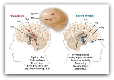 The pain and pleasure systems of the brain:   http://mindblog.dericbownds.net/2009/02/envy-and-schadenfreude-in-brain.html  The pain network consists of the dorsal anterior cingulate cortex (dACC), insula (Ins), somatosensory cortex (SSC), thalamus (Thal), and periaqueductal gray (PAG).   This network is implicated in physical and social pain processes.   The reward or pleasure network consists of the ventral tegmental area (VTA), ventral striatum (VS), ventromedial prefrontal cortex…