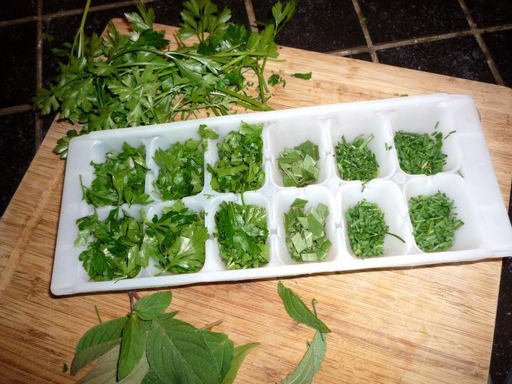 Congeler les herbes aromatiques