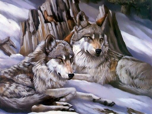 33 best Lobos  images on Pinterest  Animals Wolves and Couple