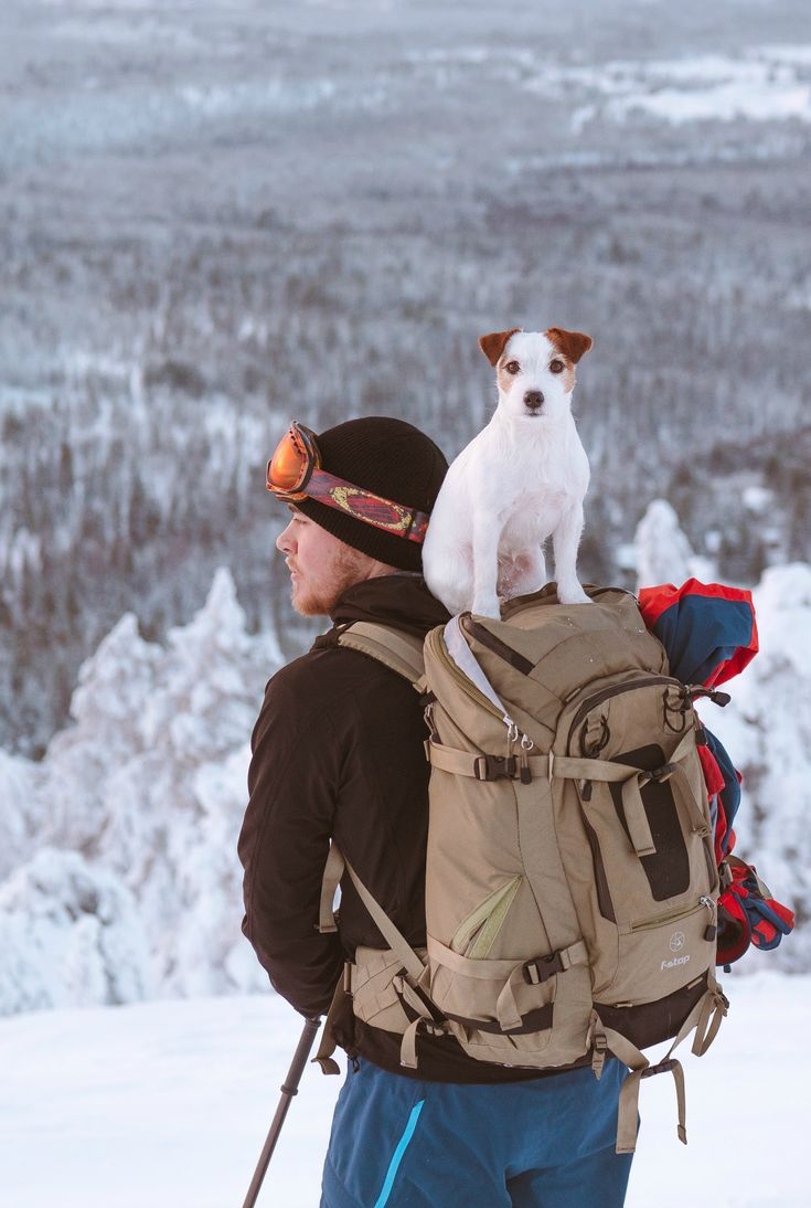 Hiking with Dog, cute Jack Russel puppy on a backpack. Skiing photography.