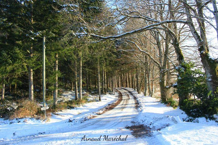 Un mélange de couleurs.  #melangedecouleurs #vert #green #white #blanc #hiver #winter #arbre #tree #way #chemin #saintmartiallevieux #creuse #limousin #nouvelleaquitaine #canon
