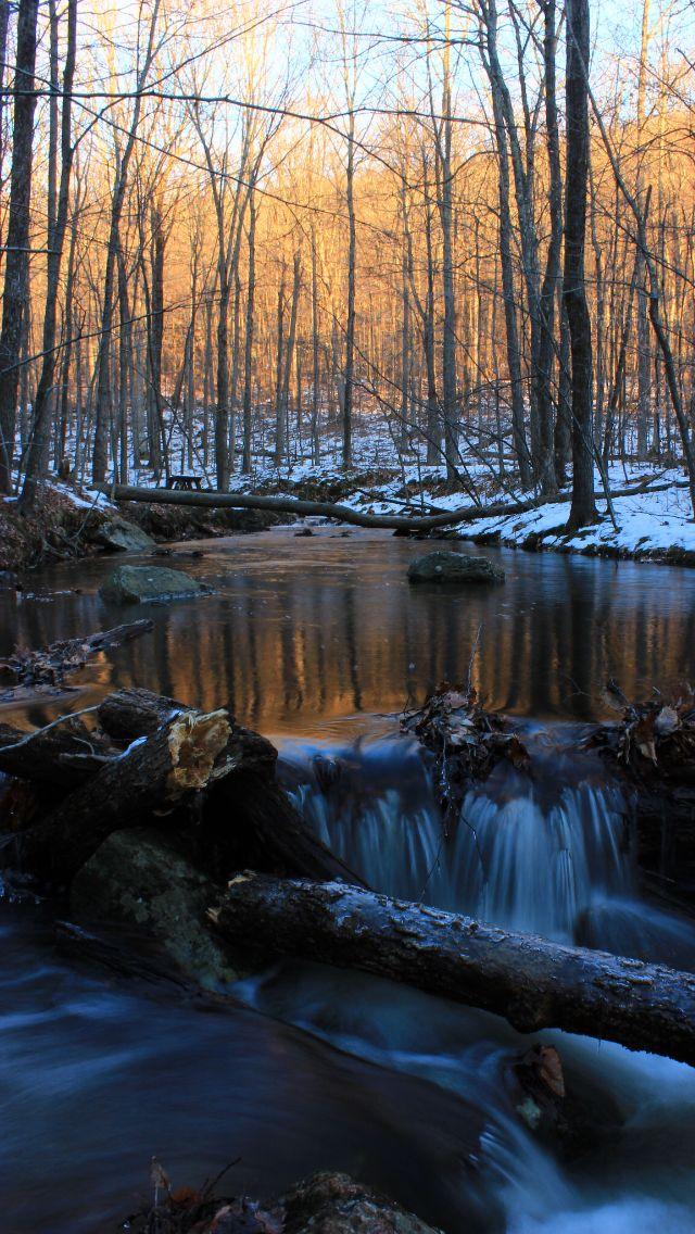 Dark winter forest  Source Flickr.com