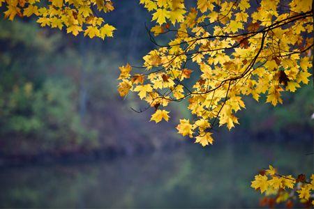 Fall Color Report: October 27-November 3, 2016 | The Morton Arboretum