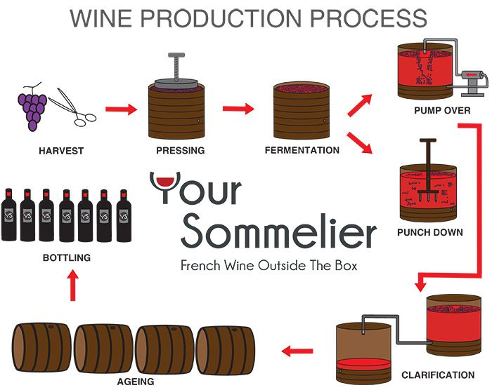 Winemaking Google Search Wine Making Winemaking Fermentation