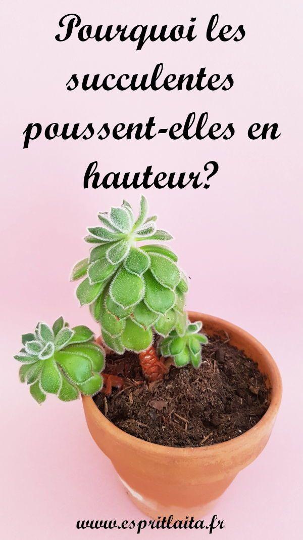 Pourquoi Les Plantes Grasses Poussent Elles En Hauteur Plantes