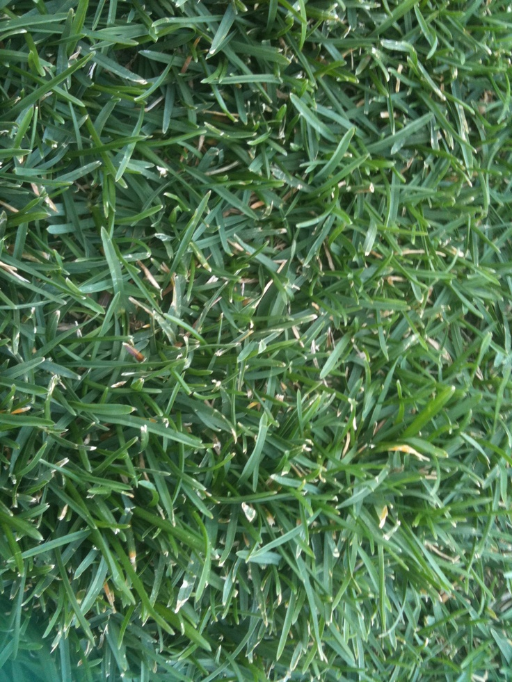 grass is so cool?