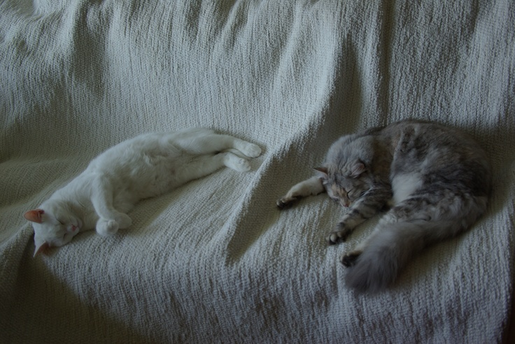 Snow angel and Silverpaw sleeping on white carpet