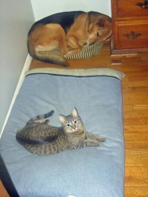 cats and dogs. Totally what mine do!!