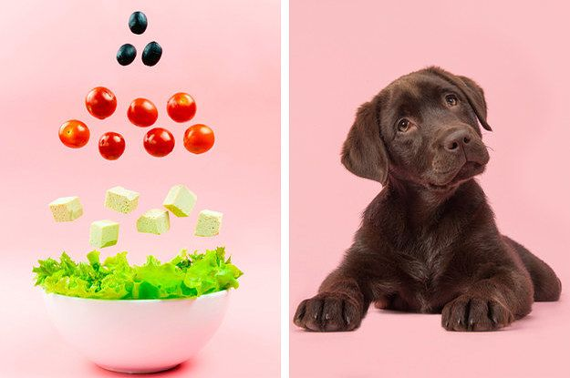 Build A Salad And Find Out Which Puppy You Are Beagle Puppy