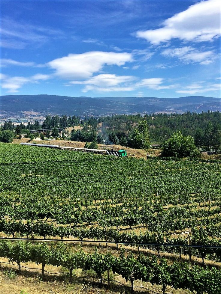 TIME TO GET A LITTLE DIRTY IN THE OKANAGAN VALLEY - featuring Dirty Laundry Winery in Summerland. #wine #winery #tour #taste