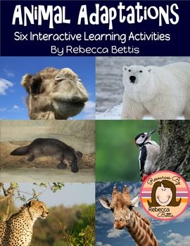 This  contains 6 interactive learning activities (27 pages total) focused on the specific physical adaptations of various animals. Featured animals include: camel, polar bear, cheetah, woodpecker, giraffe, and platypus.