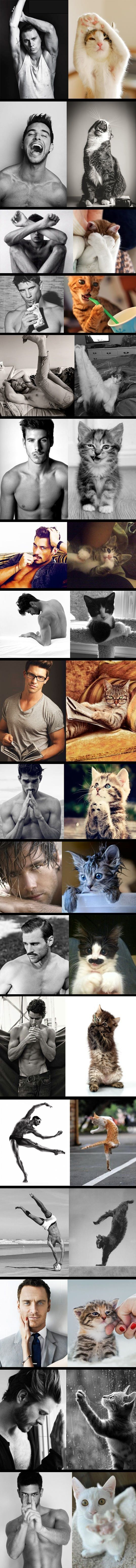 Cats > Male Models my two fav things