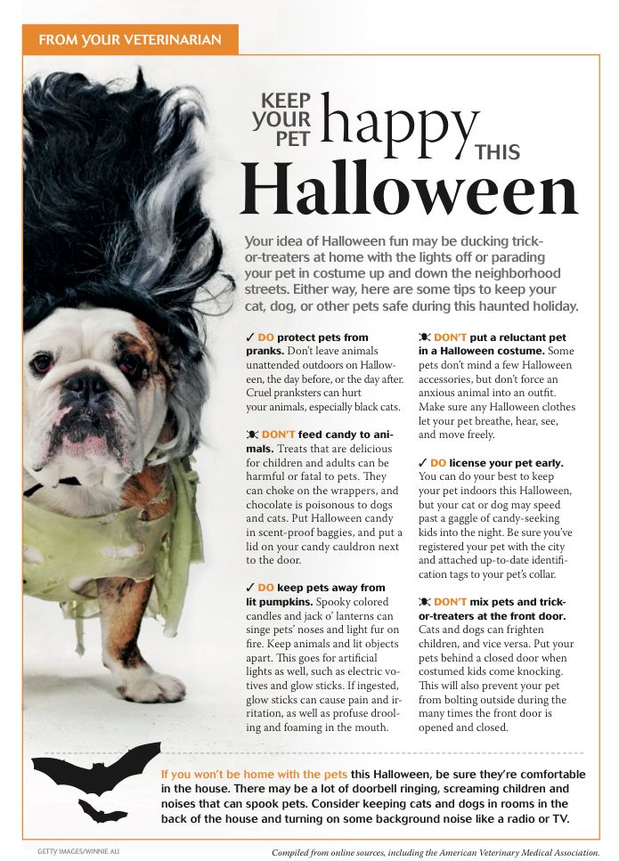 Keep Your Pet Happy This Halloween Dvm360 Pet Clinic Pet Insurance Reviews Animal Hospital