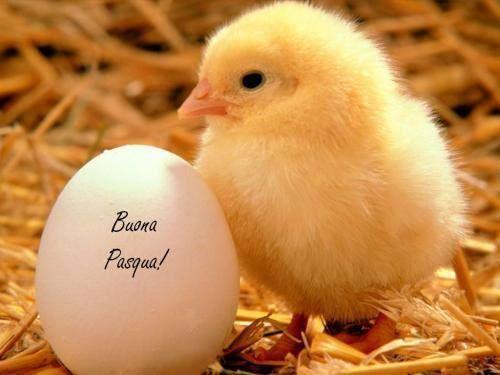 Auguri di Pasqua: le migliori immagini da condividere su WhatsApp e Facebook