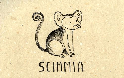 Learning Italian Language ~ Scimmia (both monkey and ape)