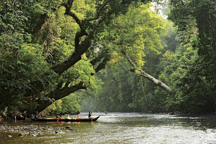 taman negara malaysia im Malaysia Reiseführer http://www.abenteurer.net/3825-malaysia-reisefuehrer/