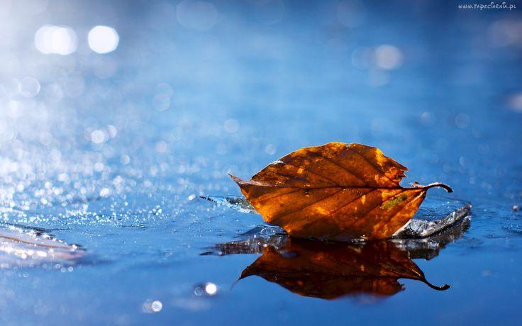Jesień, Liść, Woda, Blask