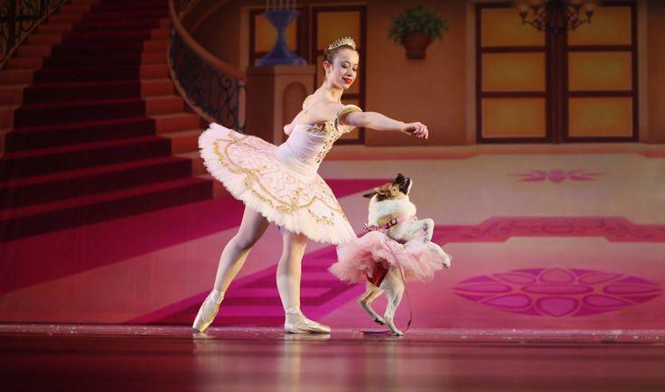 Una bailarina y un perro bailan la canción 'Sugar Plum Fairy' en el ballet El Cascanueces, en Birmingham, Alabama (EE.UU).