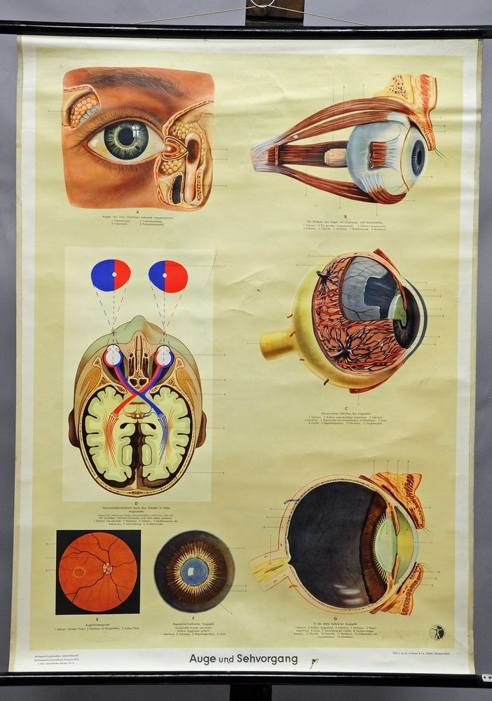 43 best medical wall charts images on Pinterest